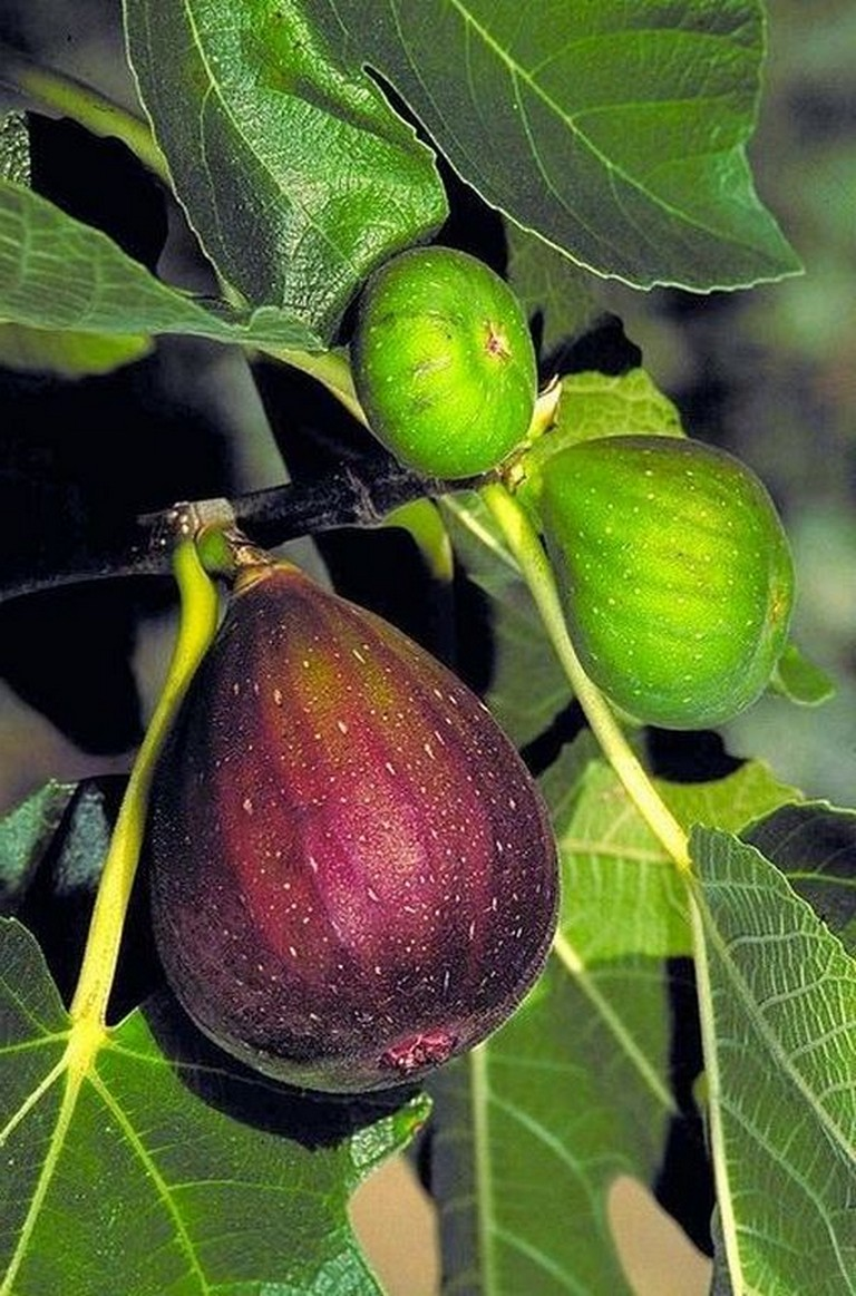 17+ Brilliant Fruit Trees Gardening Ideas Small Backyard